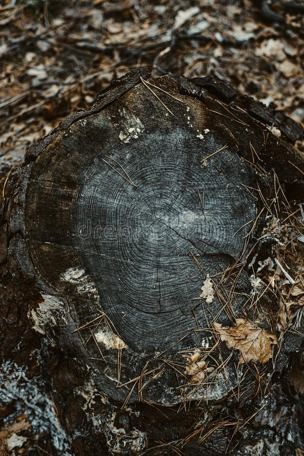 Houten textuur van golvend ringspatroon van een plak van boom Grayscale Tined houten stomp royalty-vrije stock foto's
