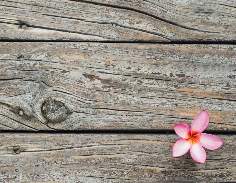 Houten textuurachtergrond met de verse roze bloem van Plumeria of Templetree- stock foto