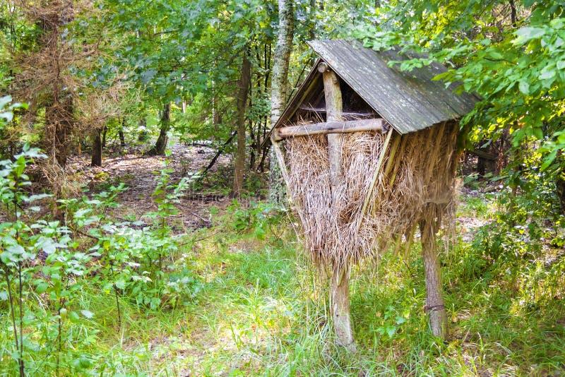 Houten voeder met hey in het bos voor wilde dieren stock fotografie