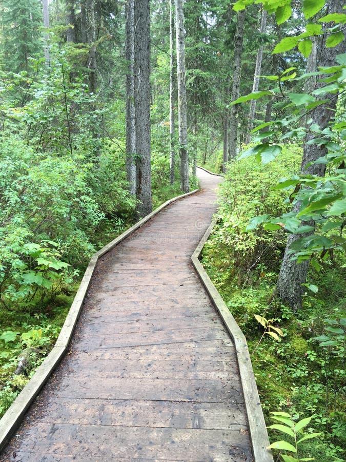 Houten voetweg in het bos in Canadees Rocky Mountains stock afbeeldingen
