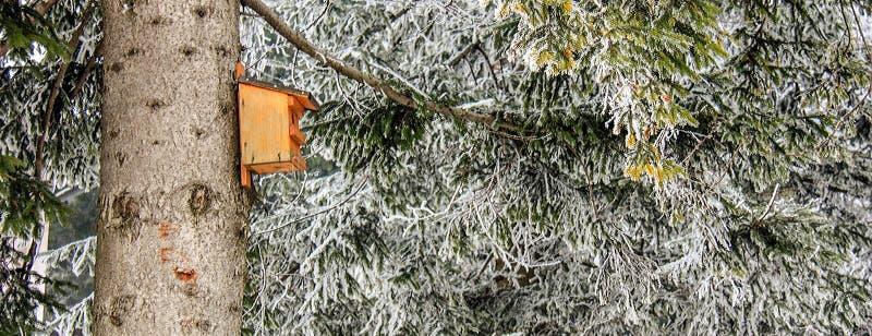 Houten vogelhuis op een boom in het de bergbos van het de wintersprookjesland met eeuw-oude sparren en pijnboom in de Oostenrijks royalty-vrije stock foto's