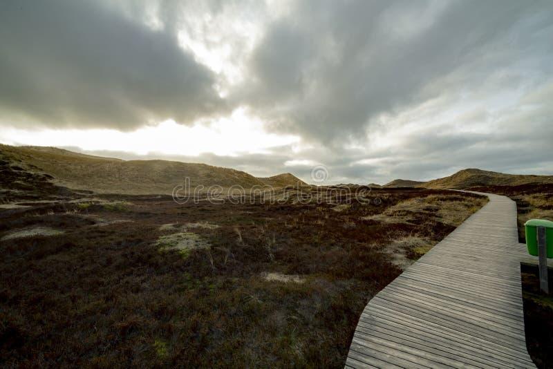 Houten weg in de duinen die door enorm duinlandschap leiden royalty-vrije stock fotografie