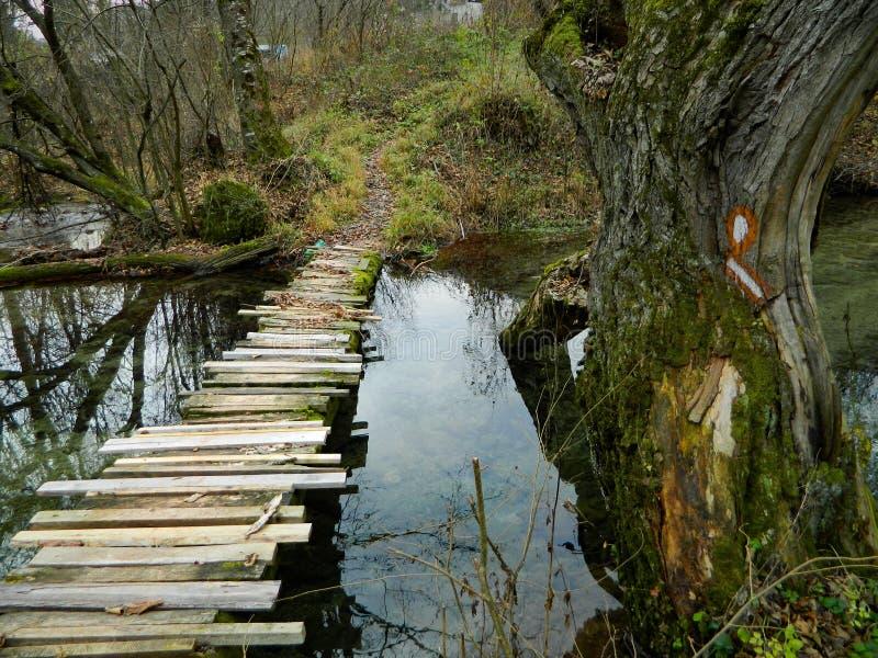 Houten weg in de herfstbos stock afbeelding