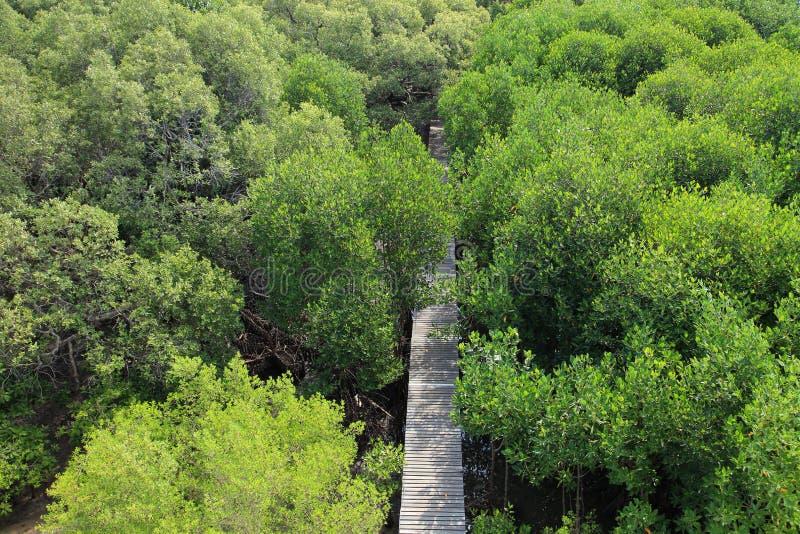 Houten weg die in het bos van het tropische gebied van het mangrovebehoud, Rayong, Thailand leiden royalty-vrije stock afbeelding