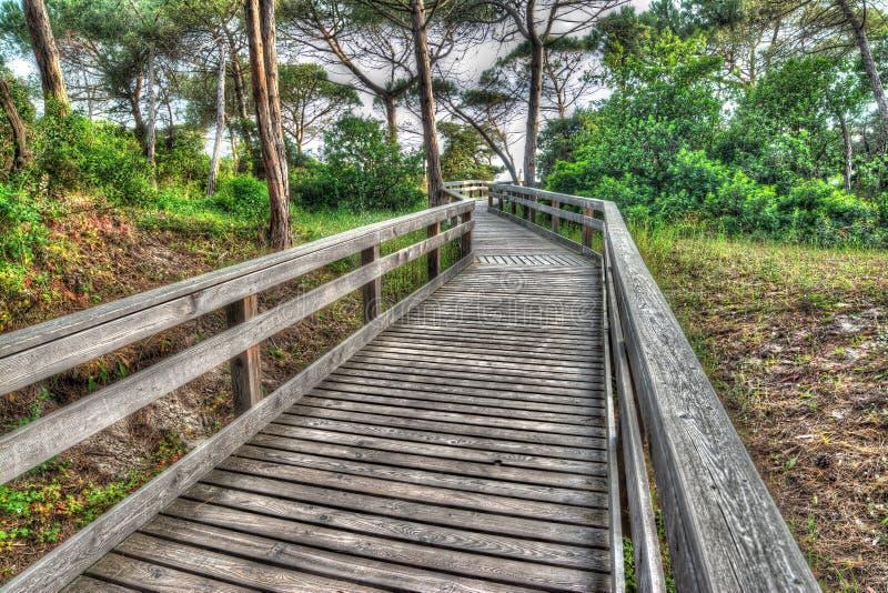 Download Houten Weg In Een Pijnboomhout Stock Afbeelding - Afbeelding bestaande uit vakantie, heuvel: 54088373