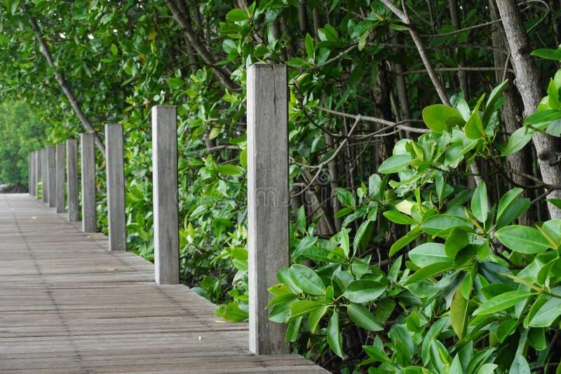 Houten weg in mangrovebos royalty-vrije stock fotografie