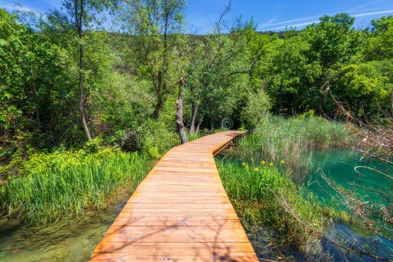 Houten weg van het Krka de nationale park in de donkergroene bos Kleurrijke de zomerscène van het Nationale Park van Krka, Kroati royalty-vrije stock fotografie