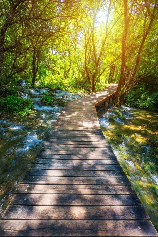 Houten weg van het Krka de nationale park in de donkergroene bos Kleurrijke de zomersc?ne van het Nationale Park van Krka, Kroati stock afbeelding