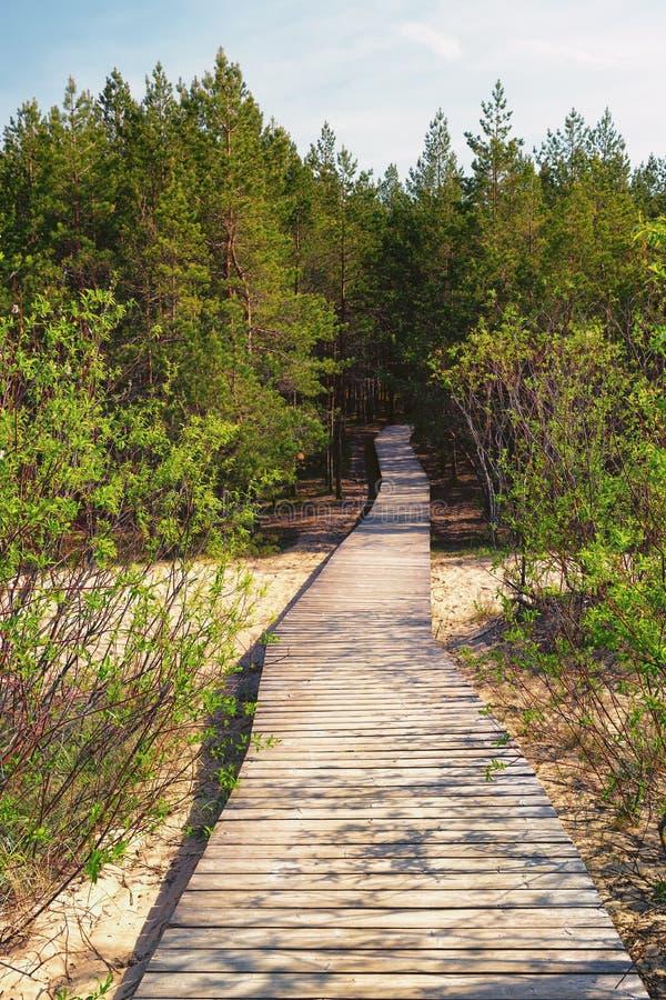 Houten weglood door de duinen aan het bos royalty-vrije stock foto