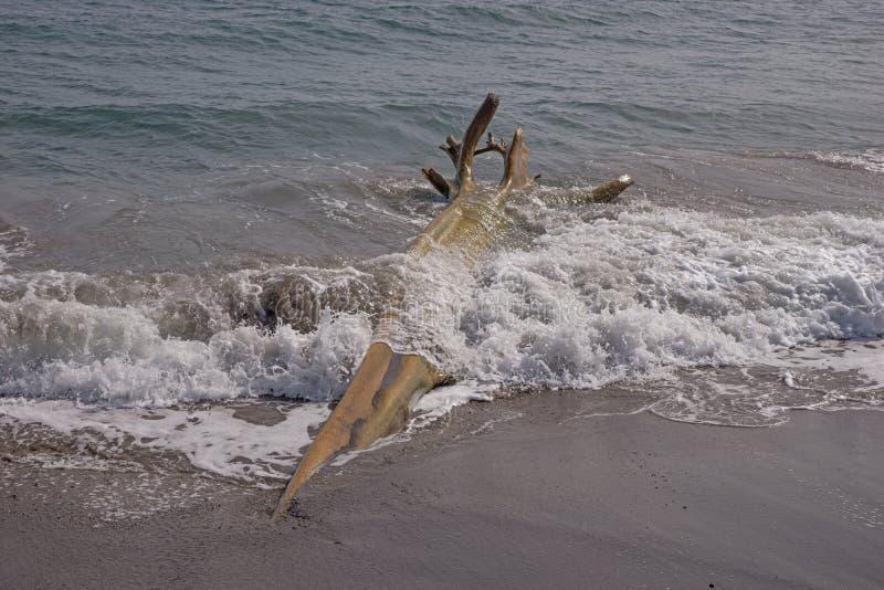 Houten wrakstukken op Caraïbisch strand stock afbeelding