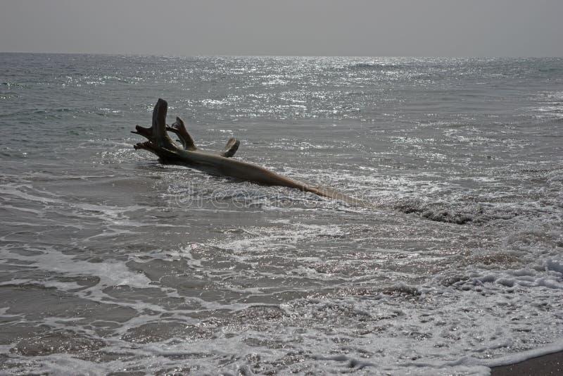 Houten wrakstukken op Caraïbisch strand stock afbeeldingen