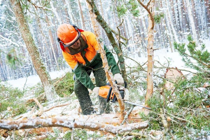 Houthakkers scherpe boom in het bos van de sneeuwwinter stock foto