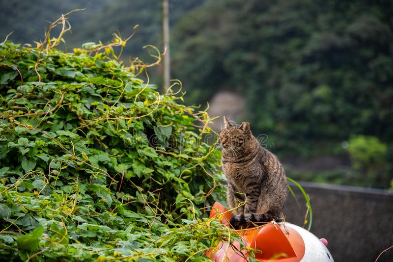 Houtong cat village. Taiwan famous cat population. stock photography
