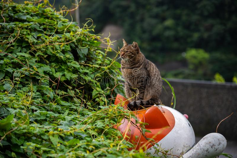 Houtong cat village. Taiwan famous cat population. royalty free stock photo