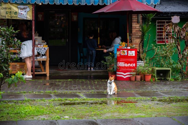 Houtong-Katzendorf Berühmter Katzenbestand Taiwans lizenzfreies stockfoto