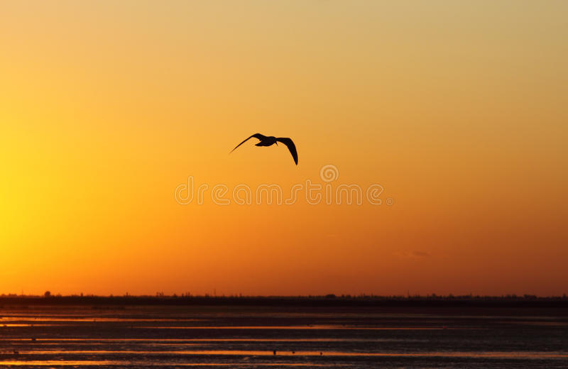 The hovering bird. A bird is hovering in dusk stock image