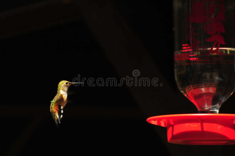 Download Hovering hummer stock image. Image of wild, bill, tail - 11004281