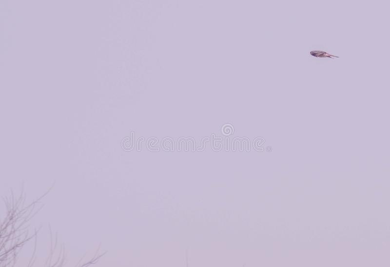 Hovering. Kestrel hovering in the air watching for his catch royalty free stock photo