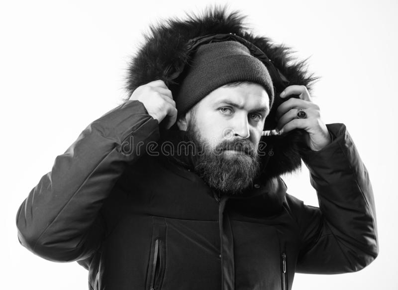 How to choose best winter jacket. Winter season menswear. Weather resistant jacket concept. Man bearded stand warm. Jacket parka isolated on white background royalty free stock photo