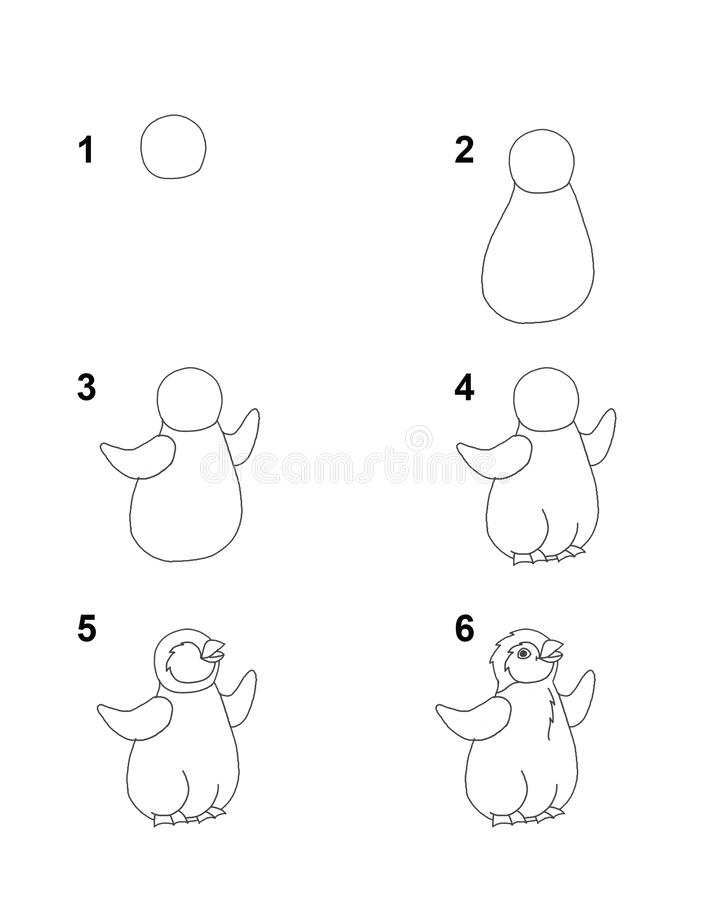Free How To Draw Pinguin Step By Step Cartoon Illustration With White Background Stock Photos - 181547393