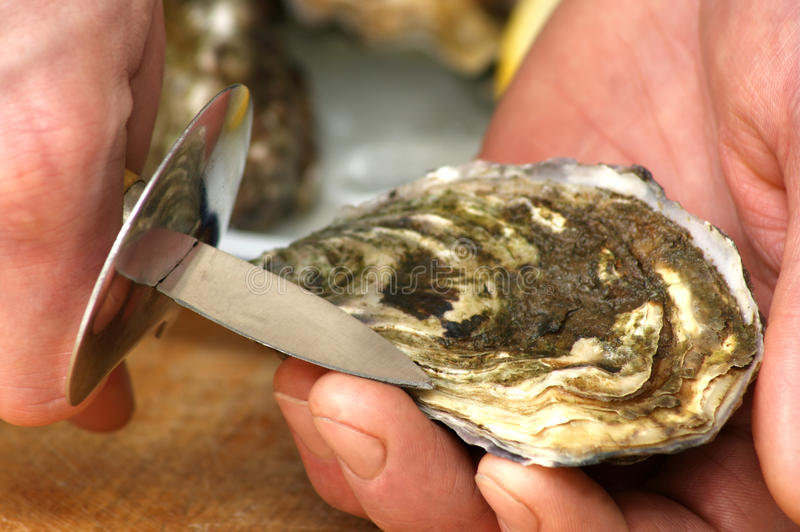 Download How to open one raw oyster stock image. Image of gourmet - 11391827