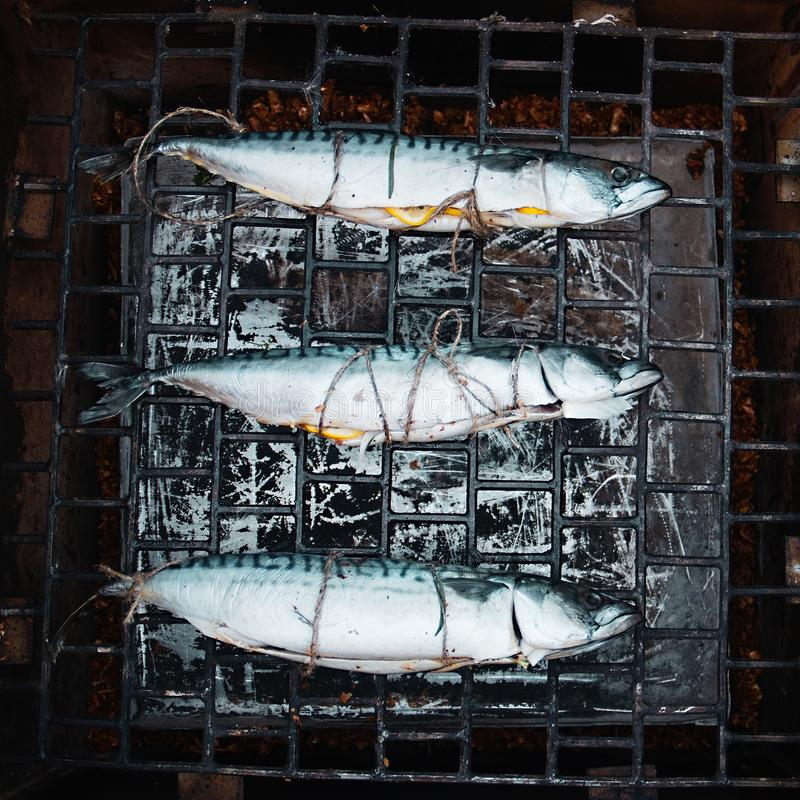 How to smoke fish at smoker. Mackerel on the smokehouse grill at home. royalty free stock photography