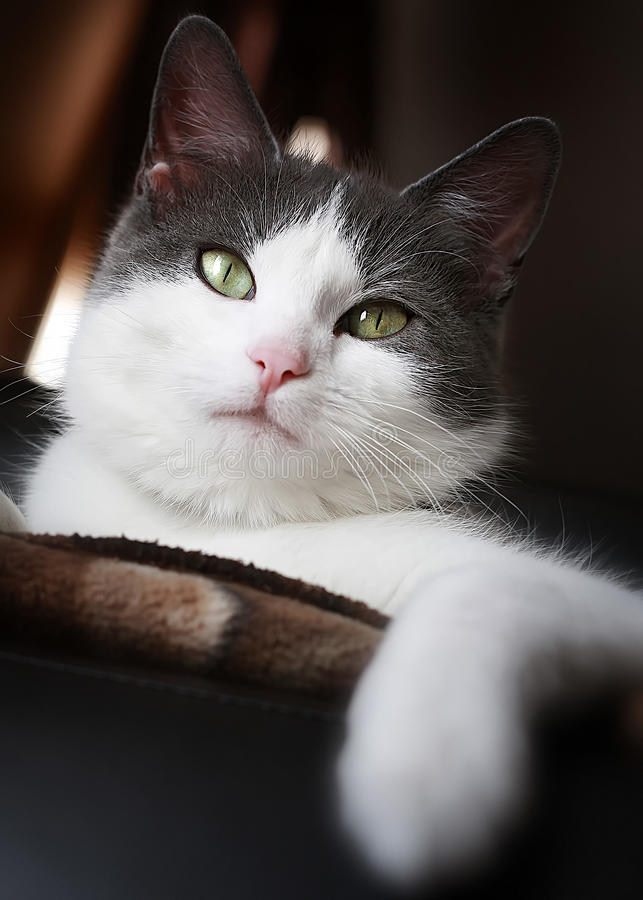 Download Howdy cat stock photo. Image of feline, green, furry - 12960706