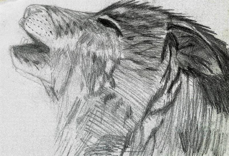 howling stock afbeeldingen
