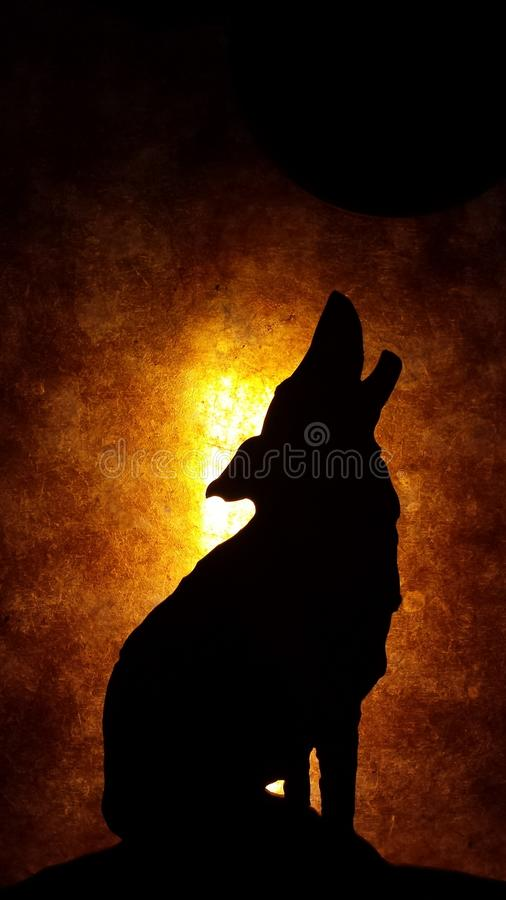 Howling Wolf with lighted background stock image