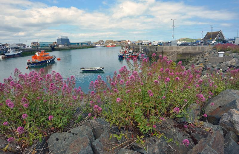 Howth hamn i Irland royaltyfri bild