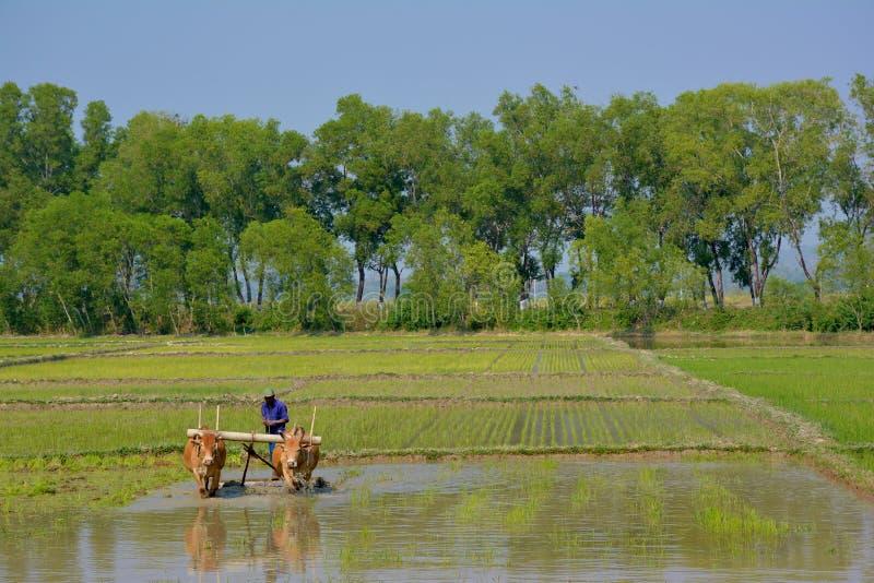 HPA-AN, MYANMAR - 10 02 Fazendeiro de 2016 birmanês que ploughing acima do campo fotografia de stock