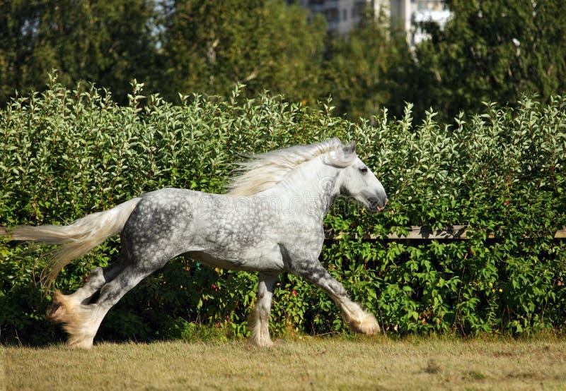 Hrabstwo szkicu konia ogiera bieg zdjęcie royalty free