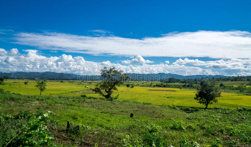 Hsipaw Myanmar. Lush ricefields in Hsipaw Myanmar stock images