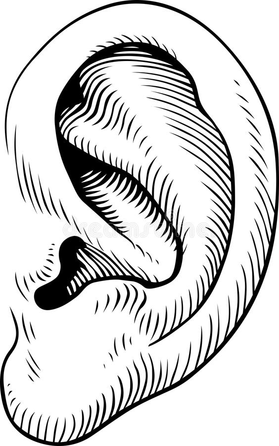 Ht-vector human ear. Easy to download, combine, resize, edit and use royalty free illustration