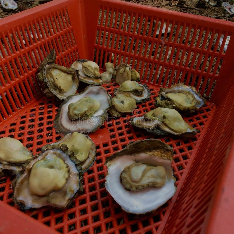 huître photos stock