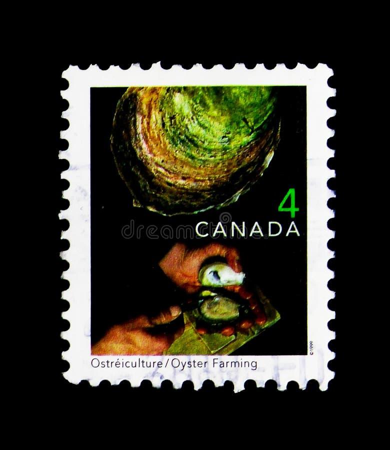 Huître cultivant, serie 1999-2002 traditionnel de Definitives des commerces, photographie stock libre de droits