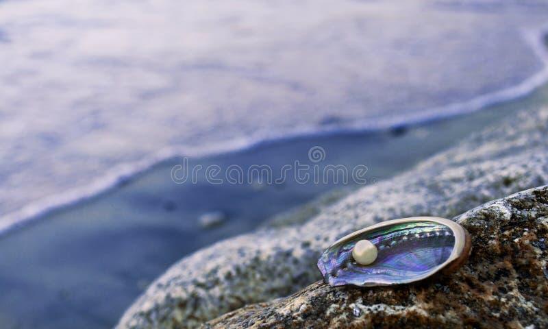Huître de perle photographie stock