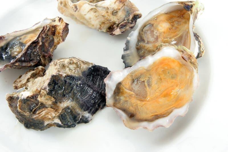 Huître, palourde ou moule images stock