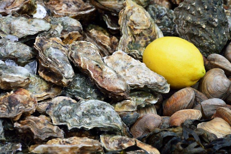 Huîtres avec le citron photographie stock libre de droits