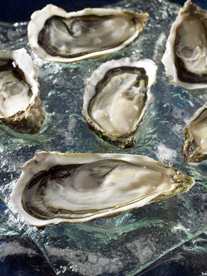 Huîtres creuses de Brittany photographie stock libre de droits