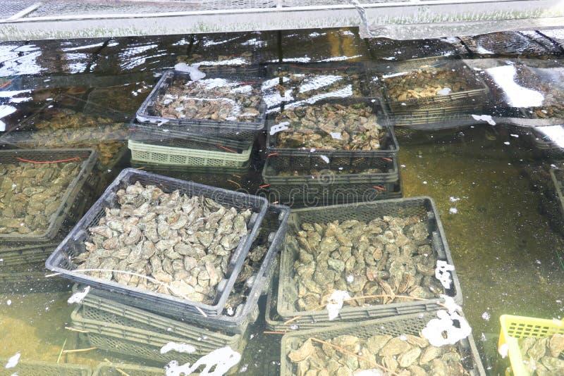Huîtres en leurs bassins de l'eau de mer du bassin d'Arcachon image libre de droits