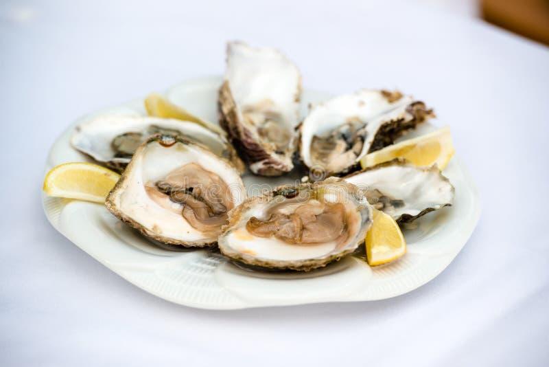 Huîtres et citron image stock