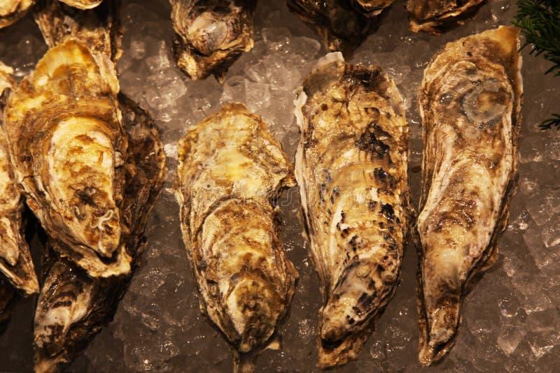 Huîtres non-ouvertes fraîches à vendre au marché photo libre de droits
