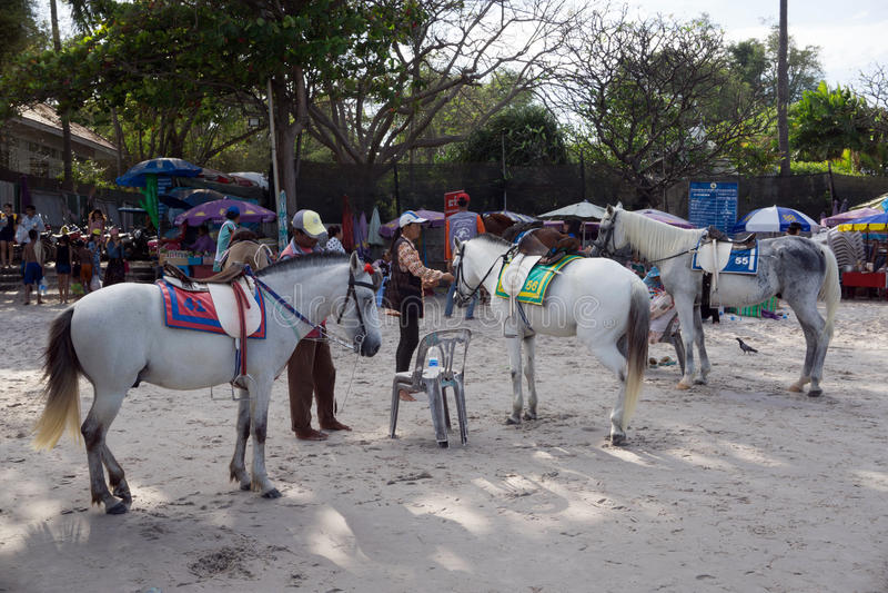 Hua Hin, Таиланд - 1-ое января 2016: Купцы подготавливая их арендных лошадей для туристского едут они вокруг пляжа стоковая фотография