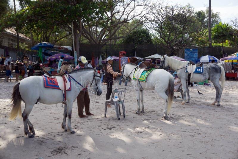 Hua Hin, Tailândia - 1º de janeiro de 2016: Os comerciantes que preparam seus cavalos alugado para o turista montam-nos em torno  fotografia de stock