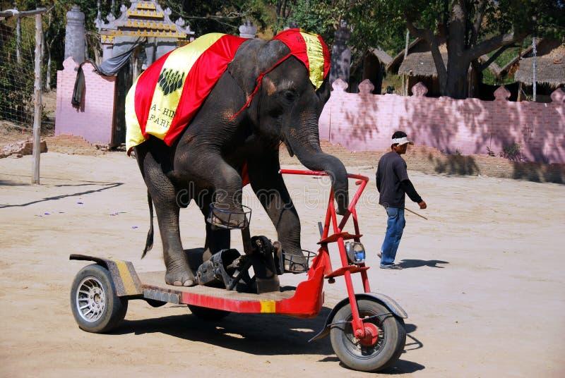 Hua Hin, Thailand: Elefant-Dorf-Erscheinen lizenzfreie stockbilder