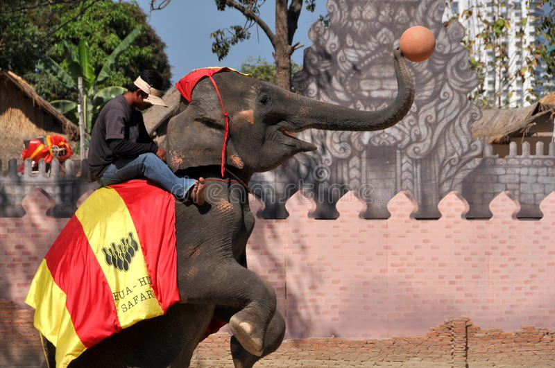 Hua Hin, Thailand: Elephant Show. An elephant playing basket ball (of sorts) coached by a trainer sitting astride the animal during the show at the Hua Hin stock photography