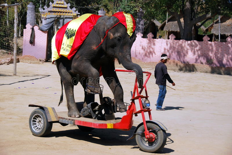 Hua Hin, Thailand: Elephant Village Show. An elephant rides its special motorcycle at a performance of the famed Hua Hin, Thailand Elephant Show - Xu Lei Photo royalty free stock images