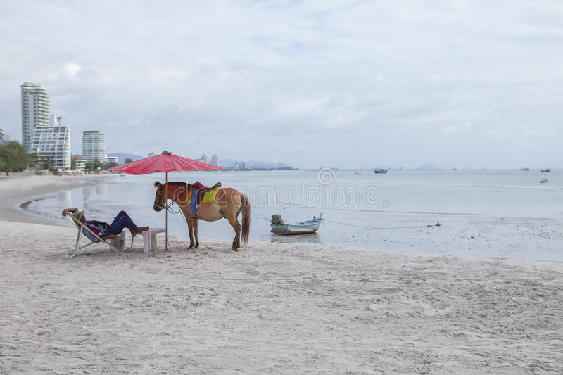 HUAHIN PRACHUAP KHIRI KHAN THAILAND -J UNE25,2016 : tourist horse keeper lying on beach chair with pony horse on huahin beach royalty free stock images