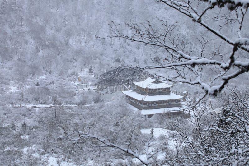 Download Huang long stock photo. Image of colors, long, tree, jiuzhaigou - 24545226